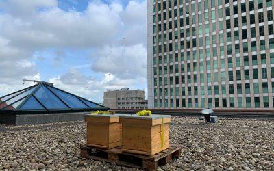 Bijenkasten op het dak van het Ministerie VWS