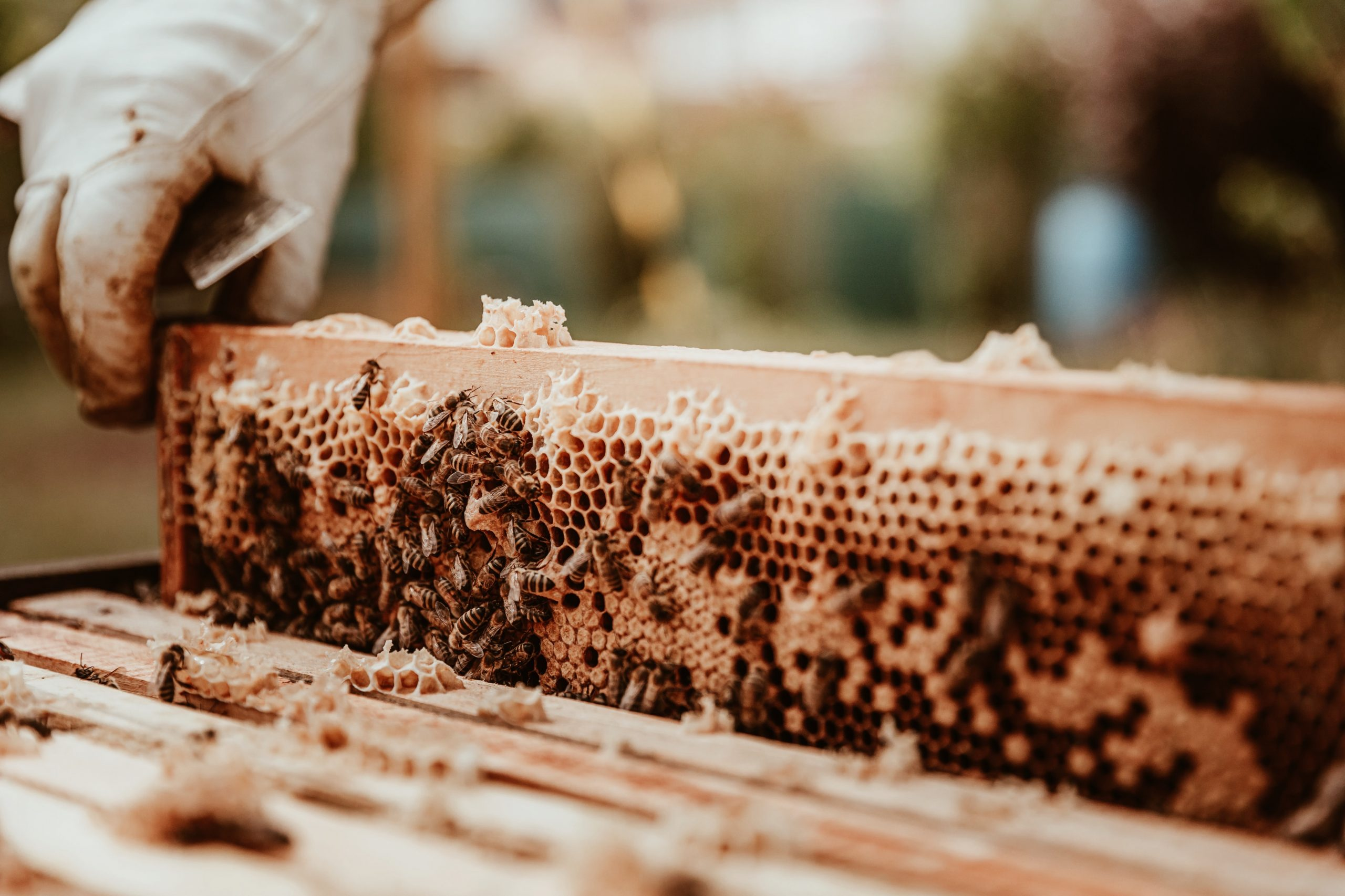 single bee frame
